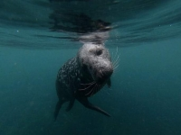 Lundy Island Diving